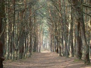 зеленоградск калининградской достопримечательности, экскурсии в калининграде
