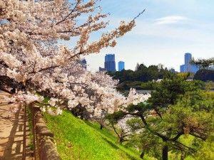 токио хотел тур 2020, экскурсии в токио